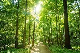 Ścieżka w środku lasu.